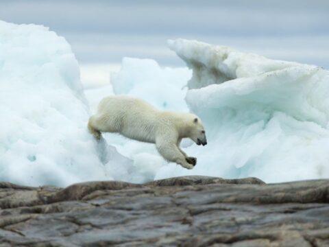 2030-ra jégmentesek lehetnek a nyarak az Északi-sarkon | ClimeNews - Hírportál