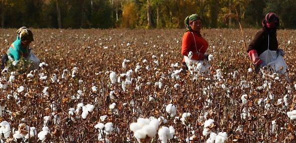 Ki a zöldebb? Versenyeznek a farmergyártók - ClimeNews