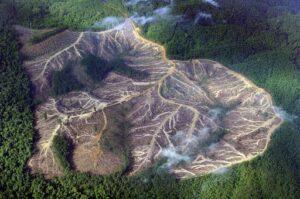 Amazóniai erdőirtás mérséklése - ClimeNews