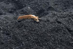 kőolajtartalék szén földgáz - kutya-szenbuckakon - ClimeNews