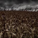 A magyar mezőgazdaságot az elsők között száríthatja el a klímaváltozás