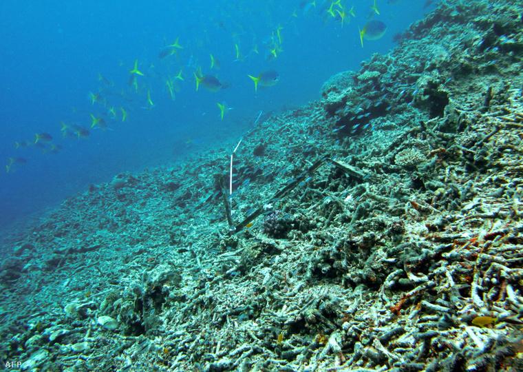 Pusztuló korallzátony - Fotó: Aims